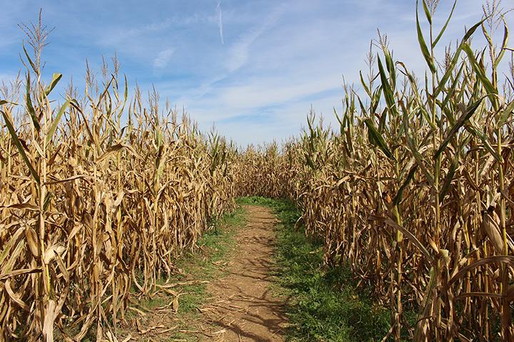 Jonamac Orchard Haunted Corn Maze